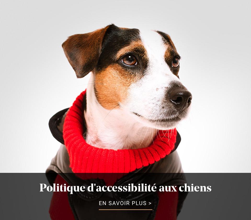 Politique chiens