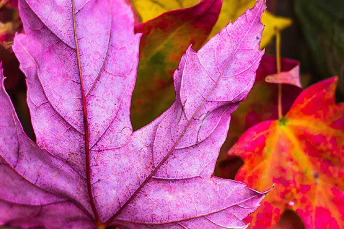 L'automne arrive à Centropolis