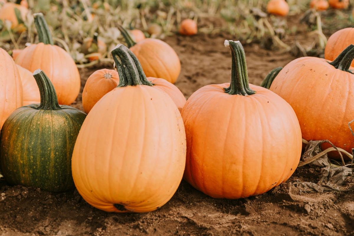 9 symboles d'Halloween qui font peur et leur histoire - Les Rivières