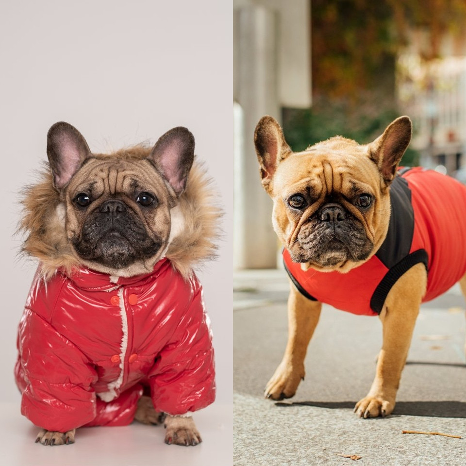 Red clothes for dogs Lunar New Year Chien Mondain - Rockland