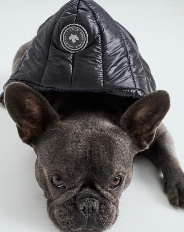NOIZE - Angel coat for dog