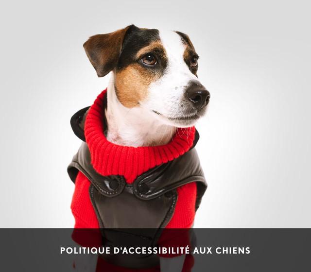 Politique d'accessibilité aux chiens | Rockland